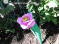 Lízátková růže