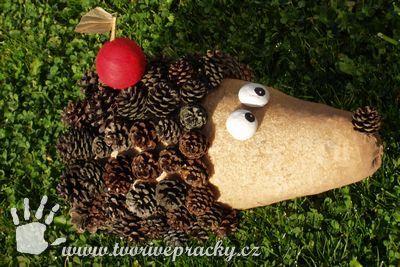 šiškový ježek